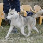 Mostra Nazionale Canina di Bellezza