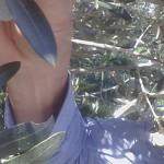 Che cosa succede all'olivo nel mese di Aprile? Guarda il Video
