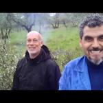 Come limitare l'insetto Punteruolo (tarlo dell'olivo)