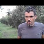 Concimazione Naturale degli olivi guarda il Video